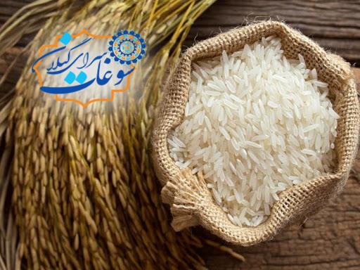 برنج شیرودی